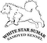 White Star Sumar Kennel Samoyed